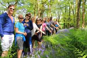 Group Bluebell Woods