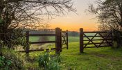 Sunset in Green Field with Flowers - Karuna Detox Retreat